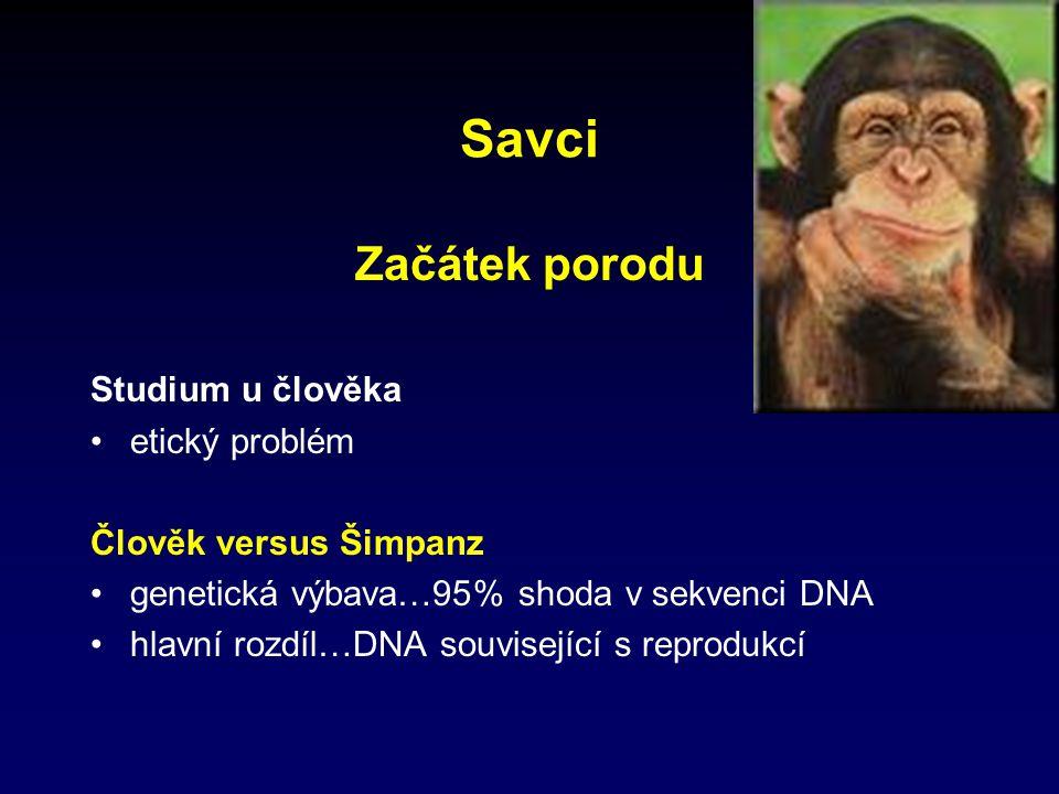 Savci Začátek porodu Studium u člověka etický problém Člověk versus Šimpanz genetická výbava…95% shoda v sekvenci DNA hlavní rozdíl…DNA související s reprodukcí