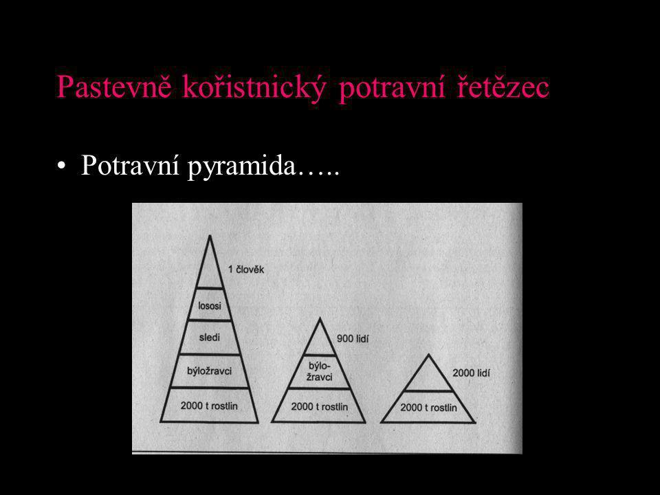 Pastevně kořistnický potravní řetězec Potravní pyramida…..