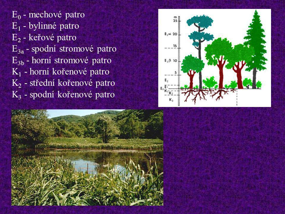 E 0 - mechové patro E 1 - bylinné patro E 2 - keřové patro E 3a - spodní stromové patro E 3b - horní stromové patro K 1 - horní kořenové patro K 2 - s