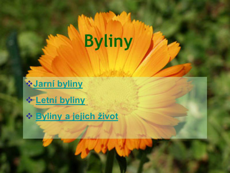 Byliny  Jarní byliny Jarní byliny  Letní bylinyLetní byliny  Byliny a jejich životByliny a jejich život
