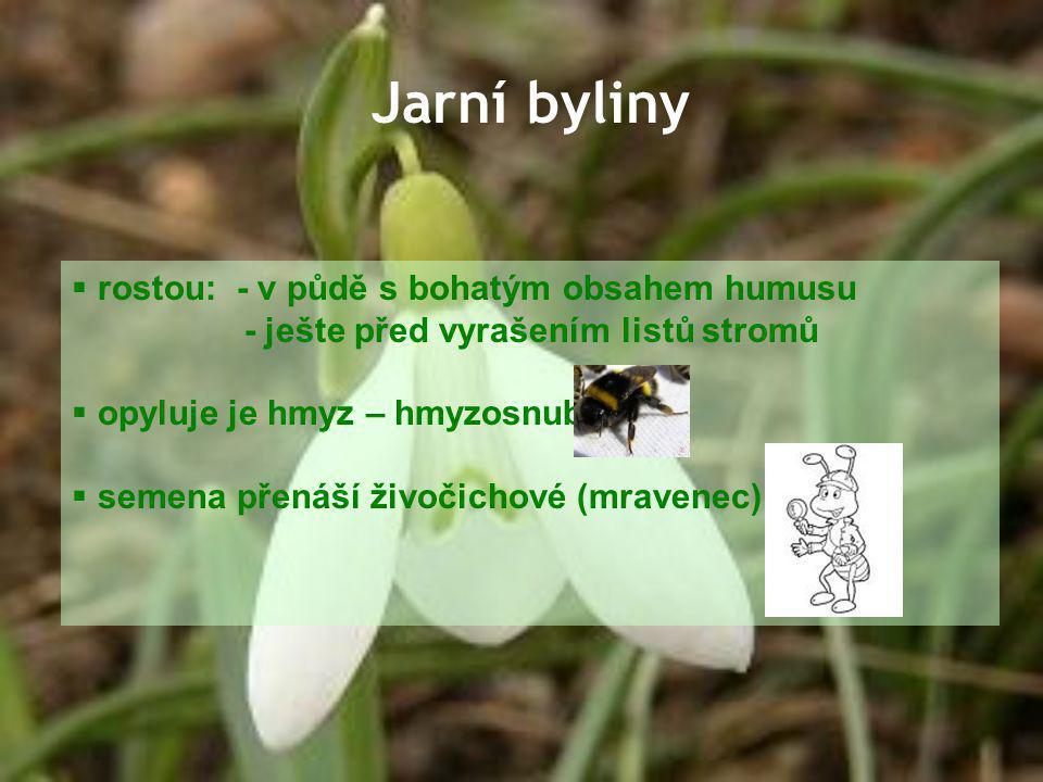 Jarní byliny  rostou: - v půdě s bohatým obsahem humusu - ješte před vyrašením listů stromů  opyluje je hmyz – hmyzosnubné  semena přenáší živočich