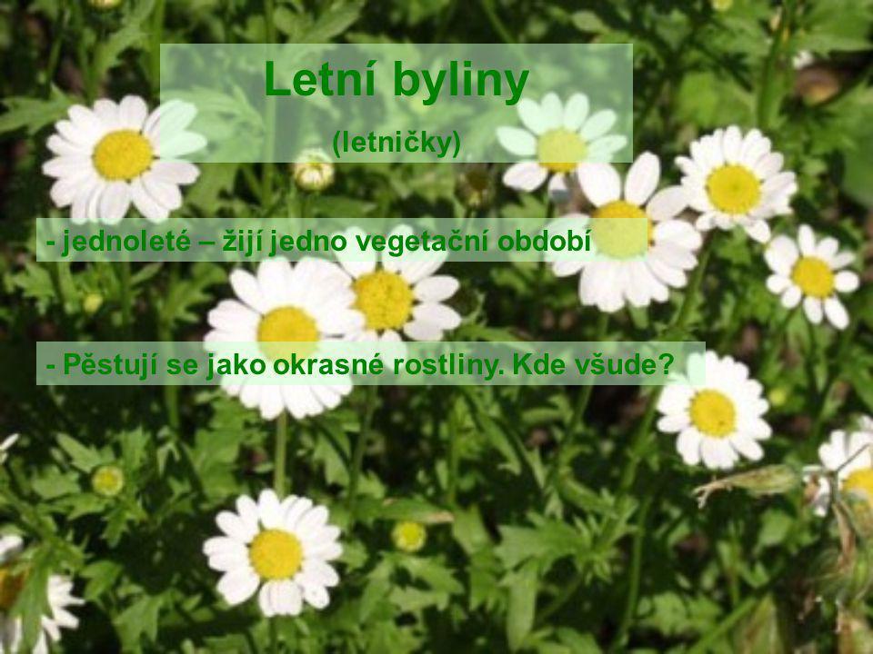 Letní byliny (letničky) - jednoleté – žijí jedno vegetační období - Pěstují se jako okrasné rostliny. Kde všude?