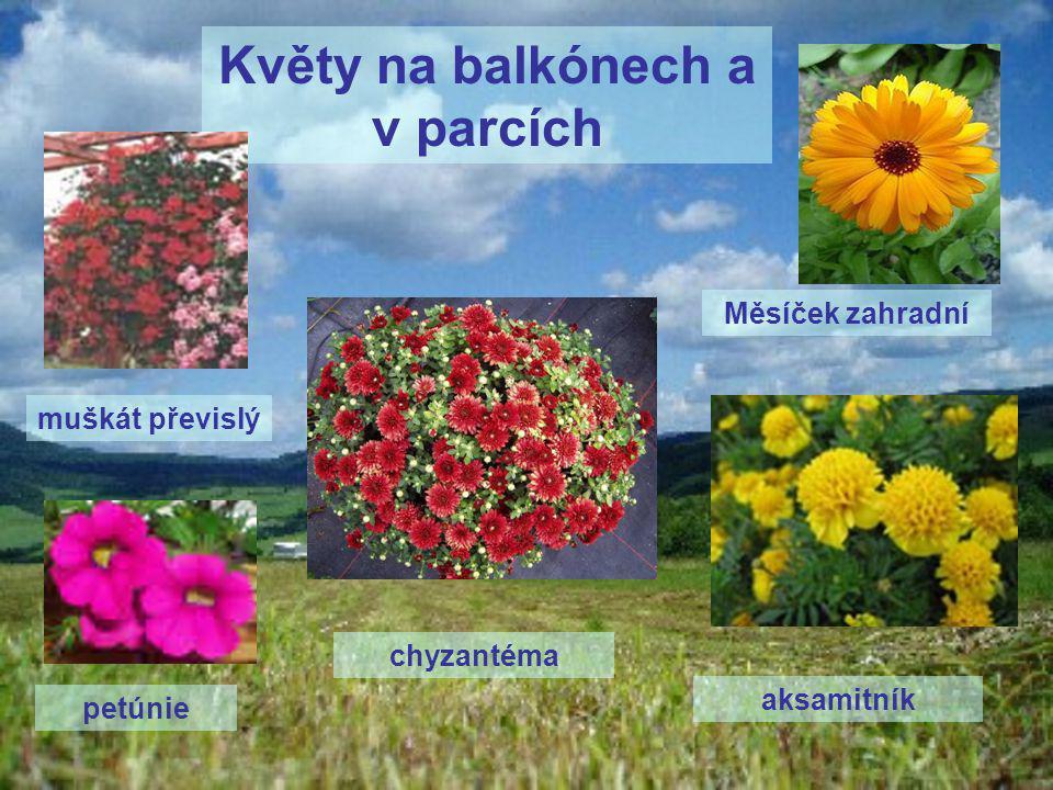 Byliny a jejich život  jednoleté byliny - V průběhu jednoho roku: klíčí – kvete – tvoří semena - uhyne dvouleté byliny - žijí dva roky: - první rok: vytvoří kořen – stonek - listy - druhý rok: kvete – tvoří semena – plody - uhyne  trvalky - žijí několik let, zimy přečkávají zásobními kořeny
