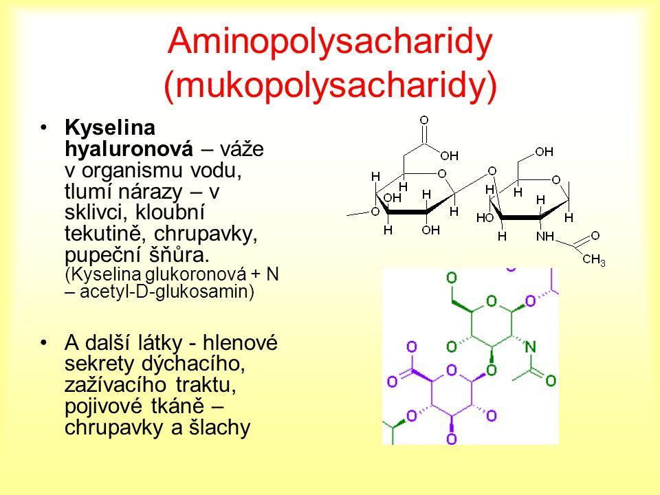 Aminopolysacharidy (mukopolysacharidy) Kyselina hyaluronová – váže v organismu vodu, tlumí nárazy – v sklivci, kloubní tekutině, chrupavky, pupeční šň