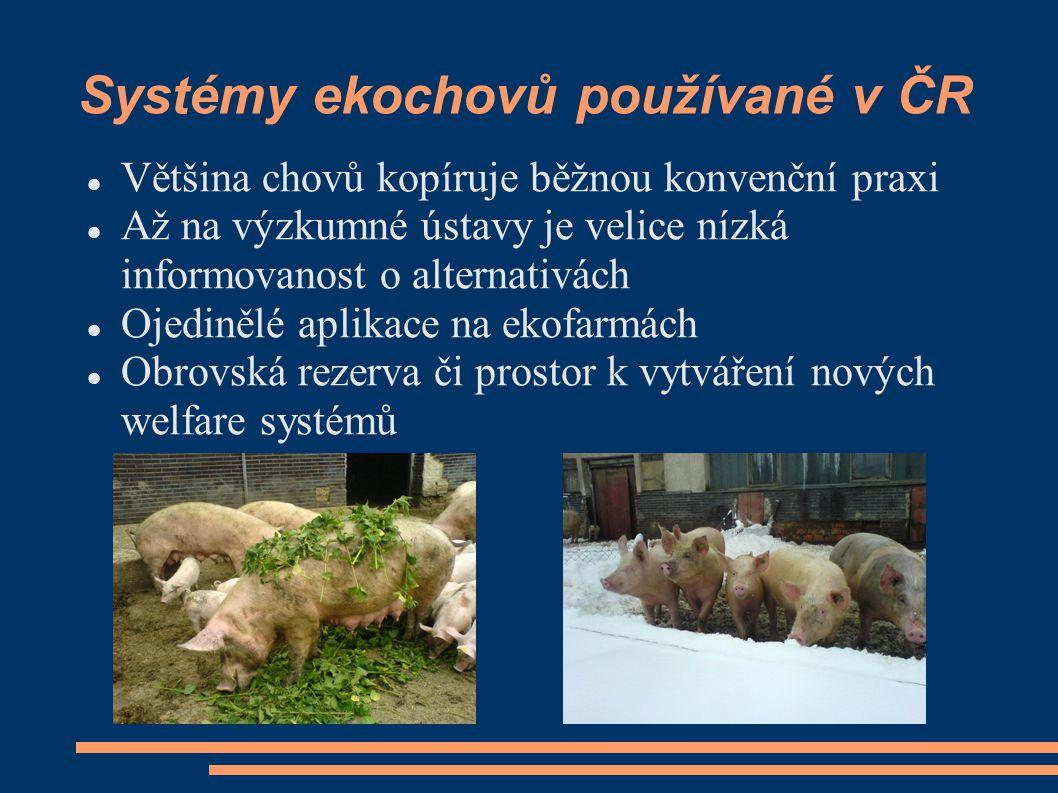 Rodinný způsob chovu a připouštění kojících prasnic Jeden z inovativních prvků na biofarmě Sasov.
