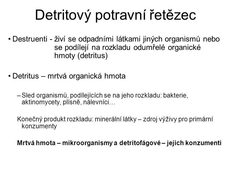 Detritový potravní řetězec Destruenti - živí se odpadními látkami jiných organismů nebo se podílejí na rozkladu odumřelé organické hmoty (detritus) De