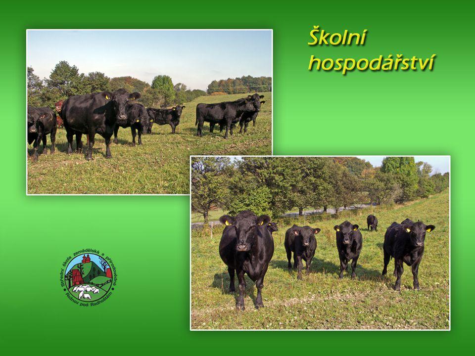 Střední škola zemědělská a přírodovědná Rožnov pod Radhoštěm Současný stav – školní hospodářství Farma je registrována jako farma ekolog. zemědělství