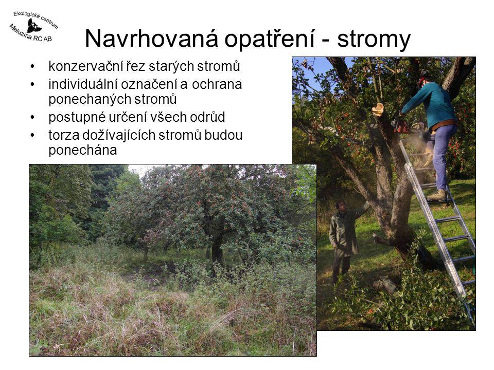 Navrhovaná opatření - stromy konzervační řez starých stromů individuální označení a ochrana ponechaných stromů postupné určení všech odrůd torza dožívajících stromů budou ponechána