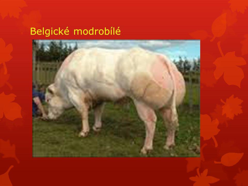 Belgické modrobílé