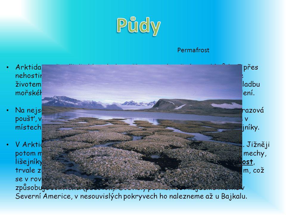 Arktida je převážně oblast ledu, sněhu a nezalesněné zmrzlé půdy.