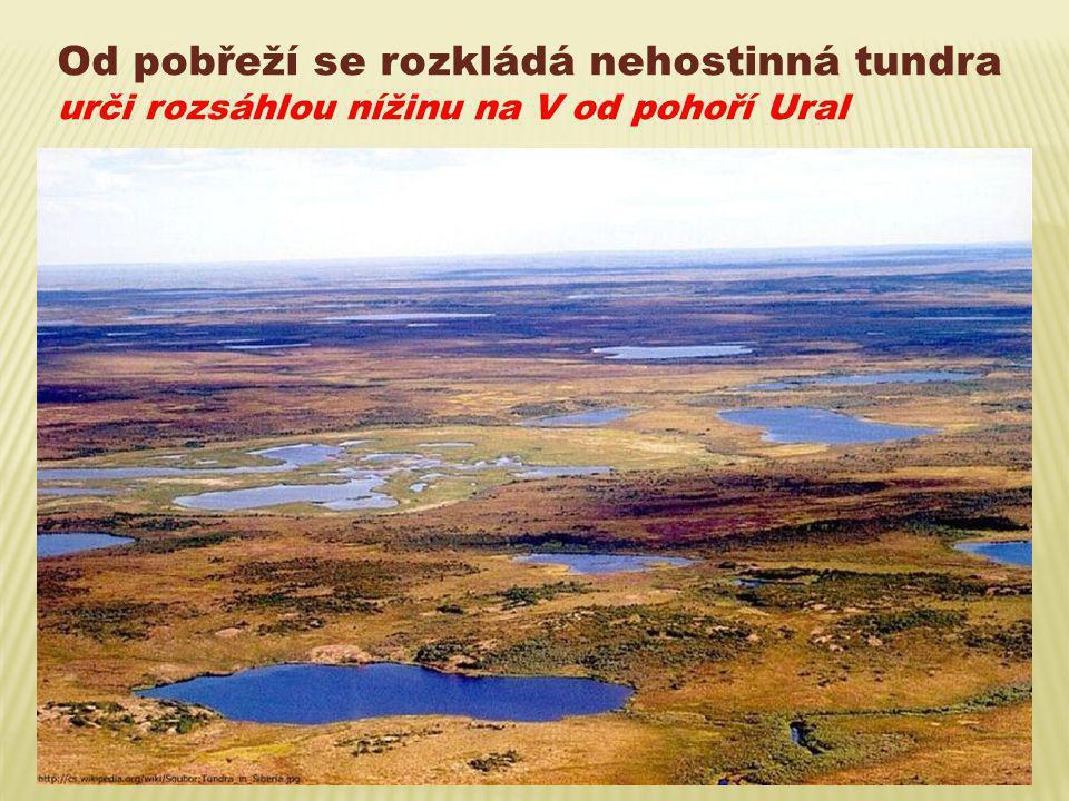 Od pobřeží se rozkládá nehostinná tundra urči rozsáhlou nížinu na V od pohoří Ural