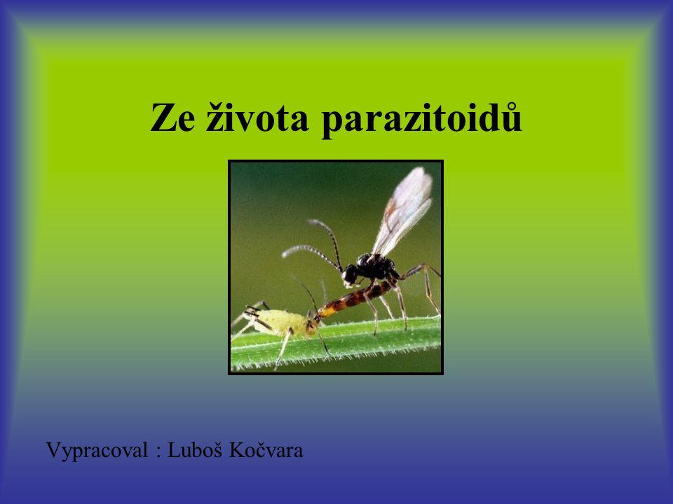 Ze života parazitoidů Vypracoval : Luboš Kočvara