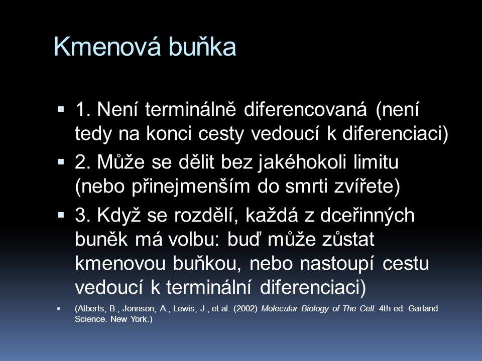Kmenová buňka  1. Není terminálně diferencovaná (není tedy na konci cesty vedoucí k diferenciaci)  2. Může se dělit bez jakéhokoli limitu (nebo přin