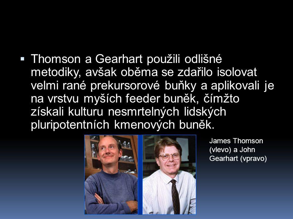  Thomson a Gearhart použili odlišné metodiky, avšak oběma se zdařilo isolovat velmi rané prekursorové buňky a aplikovali je na vrstvu myších feeder b