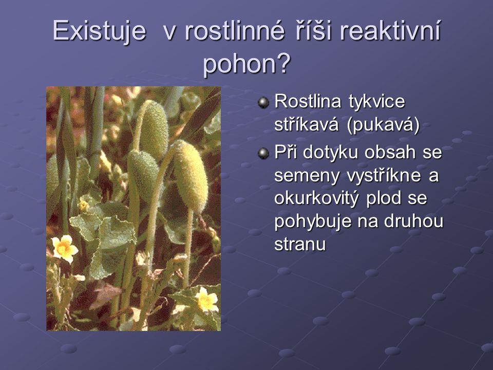 Existuje v rostlinné říši reaktivní pohon? Rostlina tykvice stříkavá (pukavá) Při dotyku obsah se semeny vystříkne a okurkovitý plod se pohybuje na dr