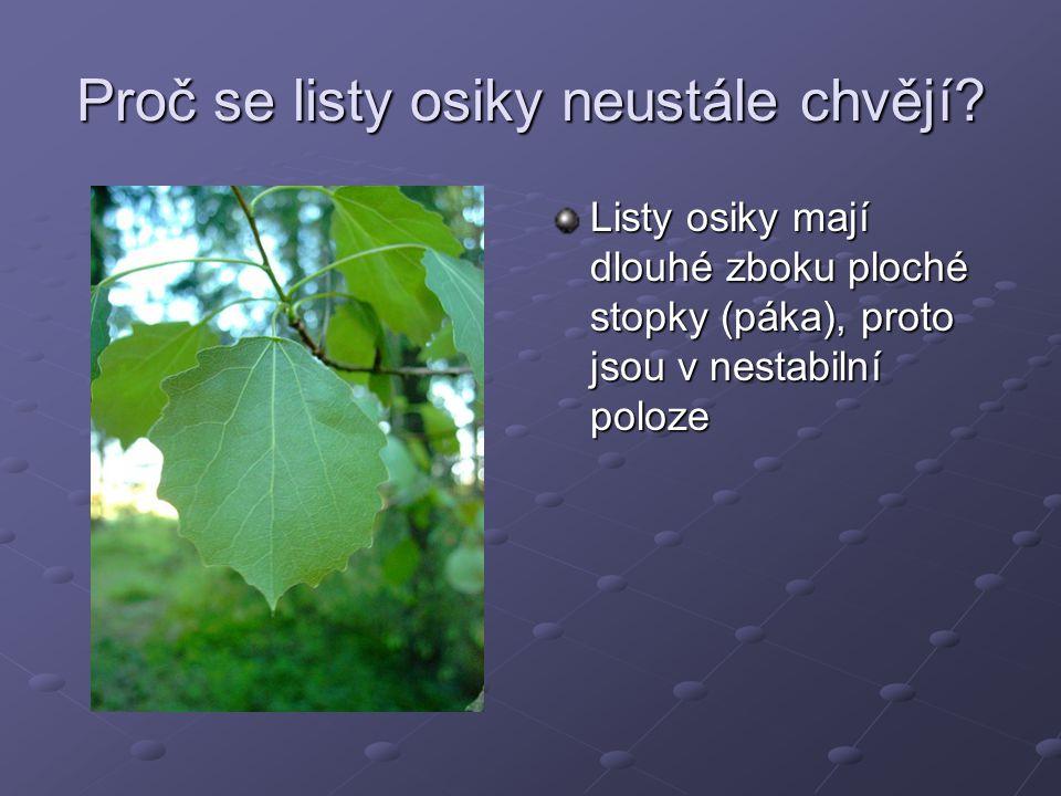 Proč se listy osiky neustále chvějí? Listy osiky mají dlouhé zboku ploché stopky (páka), proto jsou v nestabilní poloze