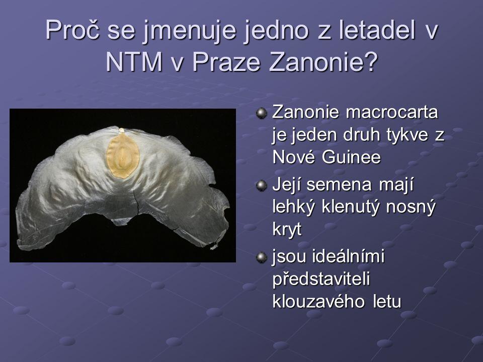 Proč se jmenuje jedno z letadel v NTM v Praze Zanonie? Zanonie macrocarta je jeden druh tykve z Nové Guinee Její semena mají lehký klenutý nosný kryt