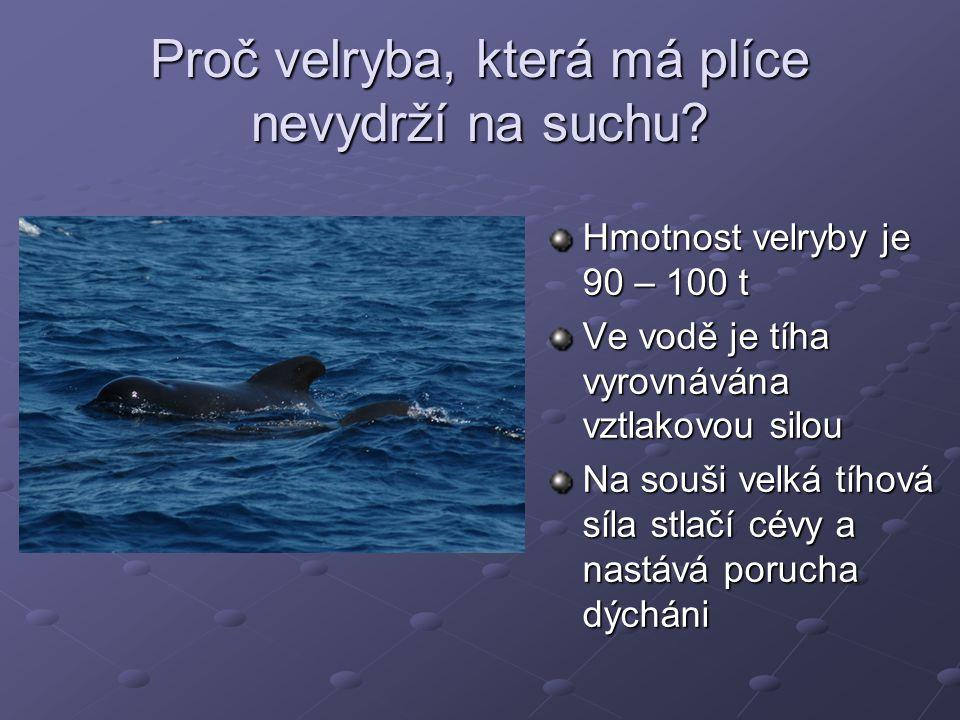 Proč velryba, která má plíce nevydrží na suchu? Hmotnost velryby je 90 – 100 t Ve vodě je tíha vyrovnávána vztlakovou silou Na souši velká tíhová síla