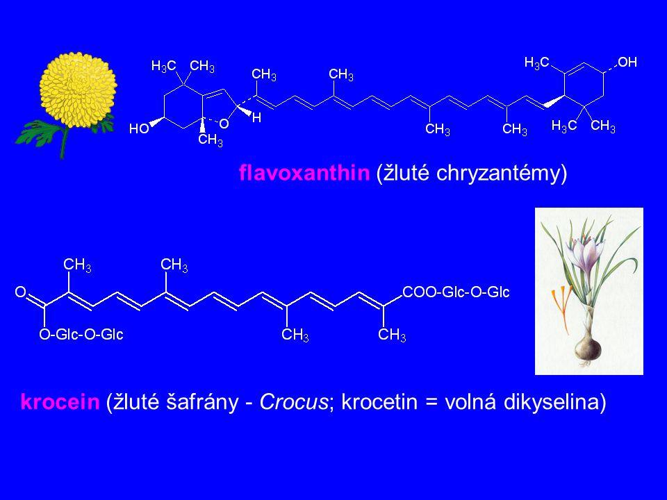 flavoxanthin (žluté chryzantémy) krocein (žluté šafrány - Crocus; krocetin = volná dikyselina)