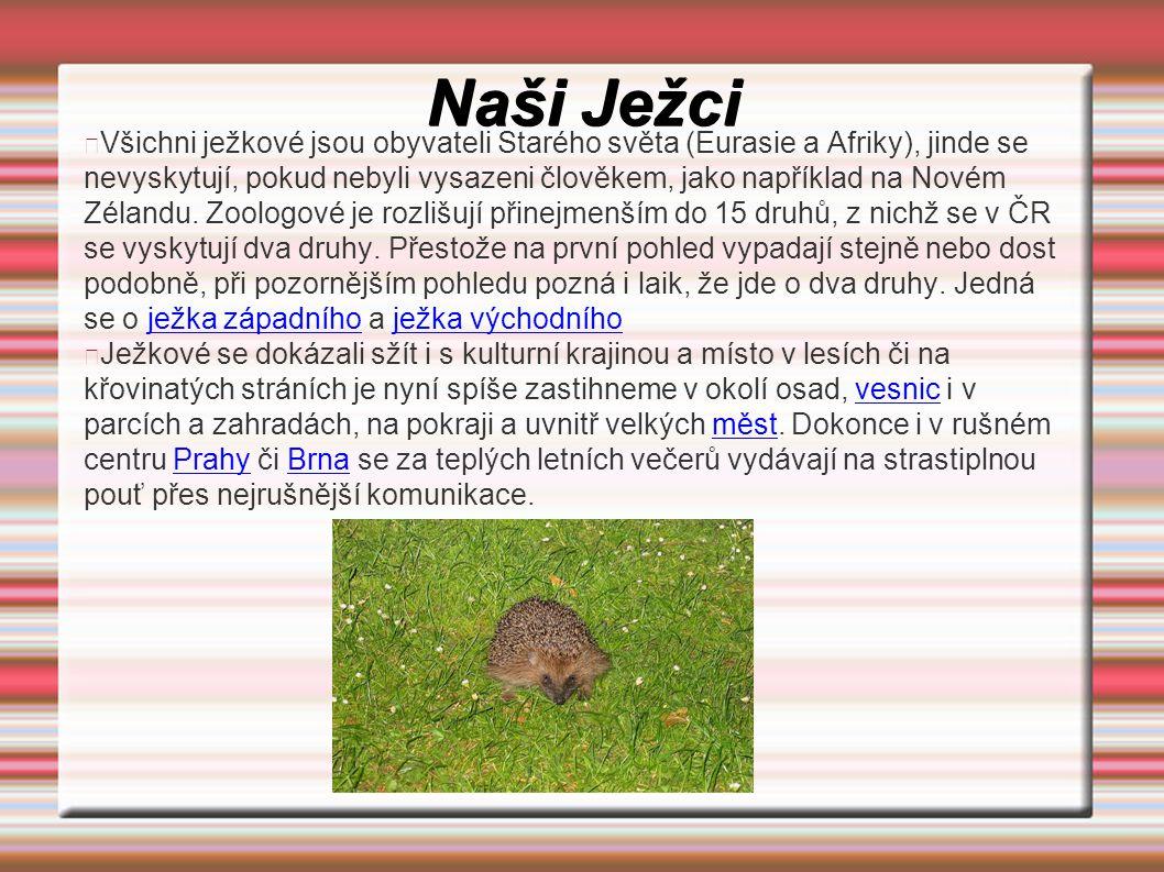 Naši Ježci Všichni ježkové jsou obyvateli Starého světa (Eurasie a Afriky), jinde se nevyskytují, pokud nebyli vysazeni člověkem, jako například na No