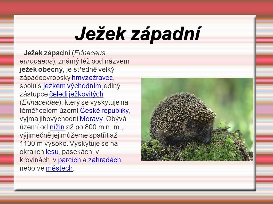 Ježek západní Ježek západní (Erinaceus europaeus), známý též pod názvem ježek obecný, je středně velký západoevropský hmyzožravec, spolu s ježkem vých