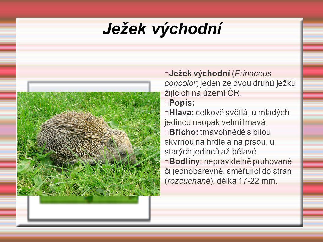 Ježek východní Ježek východní (Erinaceus concolor) jeden ze dvou druhů ježků žijících na území ČR. Popis: Hlava: celkově světlá, u mladých jedinců nao