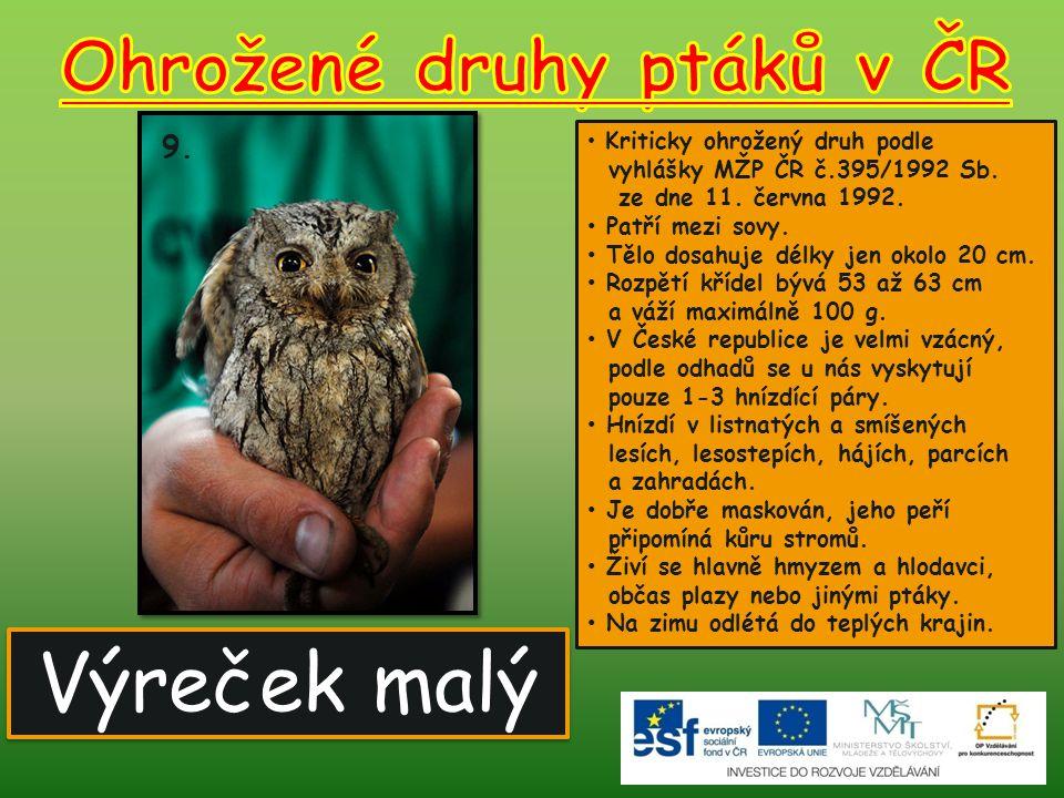 Výreček malý 9.Kriticky ohrožený druh podle vyhlášky MŽP ČR č.395/1992 Sb.