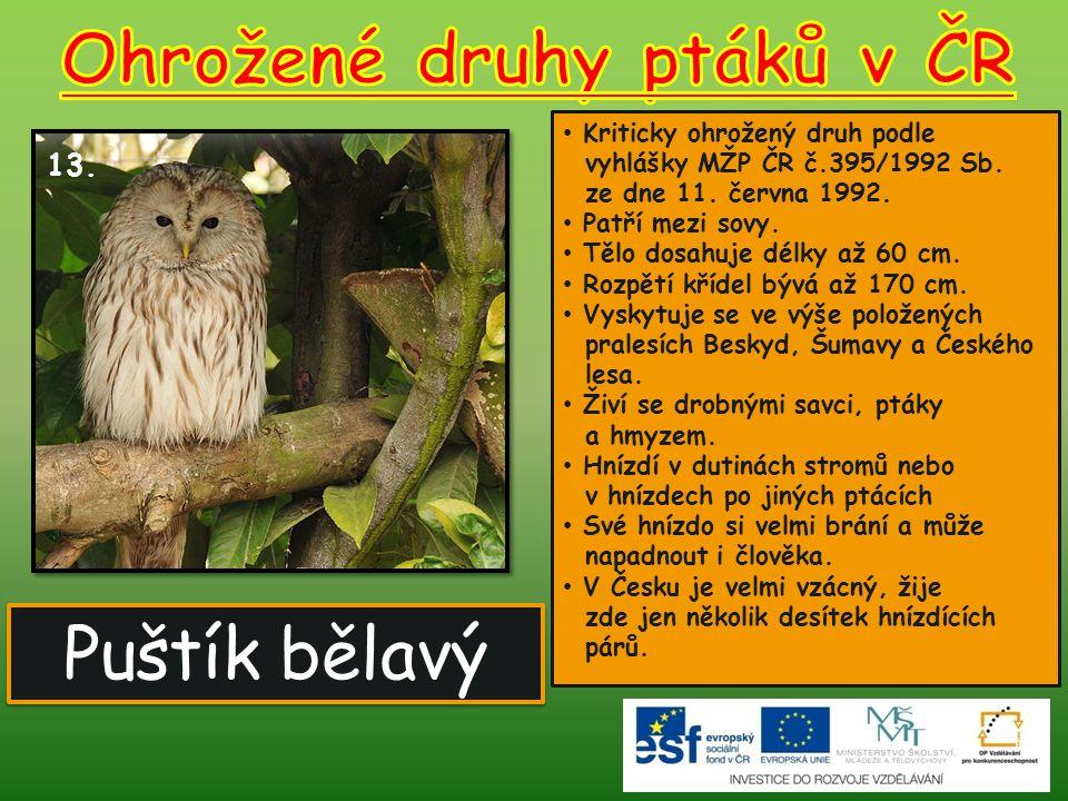 Puštík bělavý 13. Kriticky ohrožený druh podle vyhlášky MŽP ČR č.395/1992 Sb. ze dne 11. června 1992. Patří mezi sovy. Tělo dosahuje délky až 60 cm. R