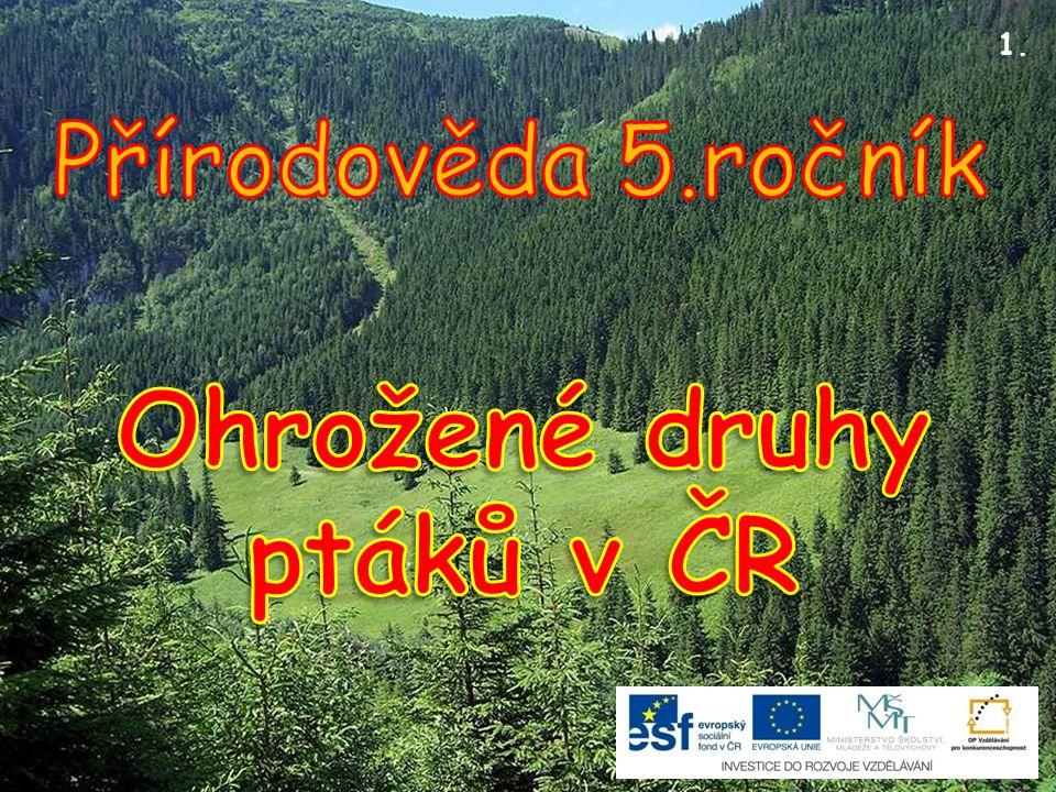 Poštolka rudonohá 12.Kriticky ohrožený druh podle vyhlášky MŽP ČR č.395/1992 Sb.