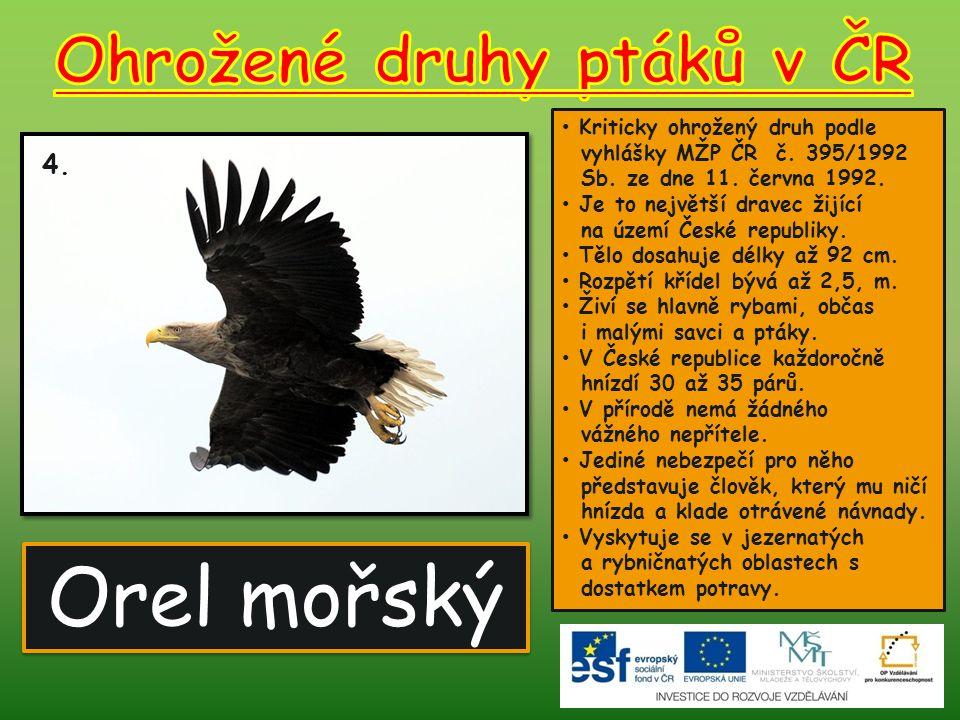 Orel mořský 4.Kriticky ohrožený druh podle vyhlášky MŽP ČR č.