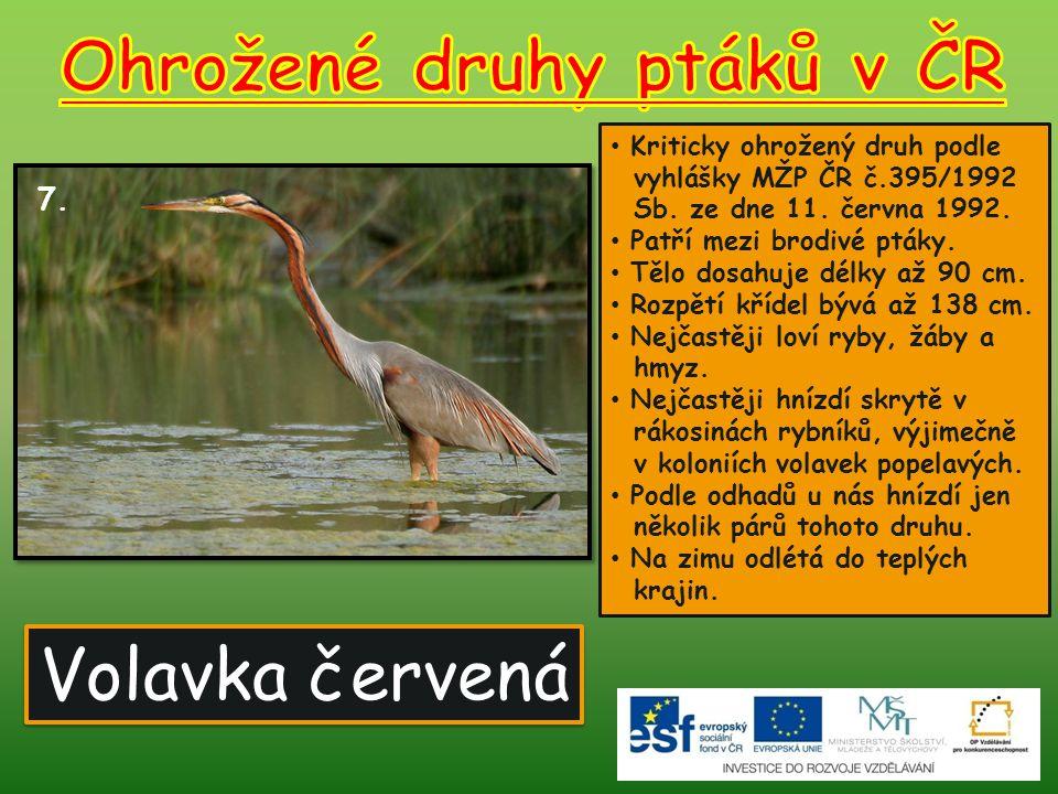 Volavka červená 7.Kriticky ohrožený druh podle vyhlášky MŽP ČR č.395/1992 Sb.