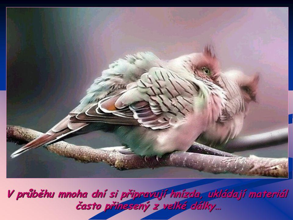 Pozoroval jsi někdy chování ptáků, když se jim nedaří
