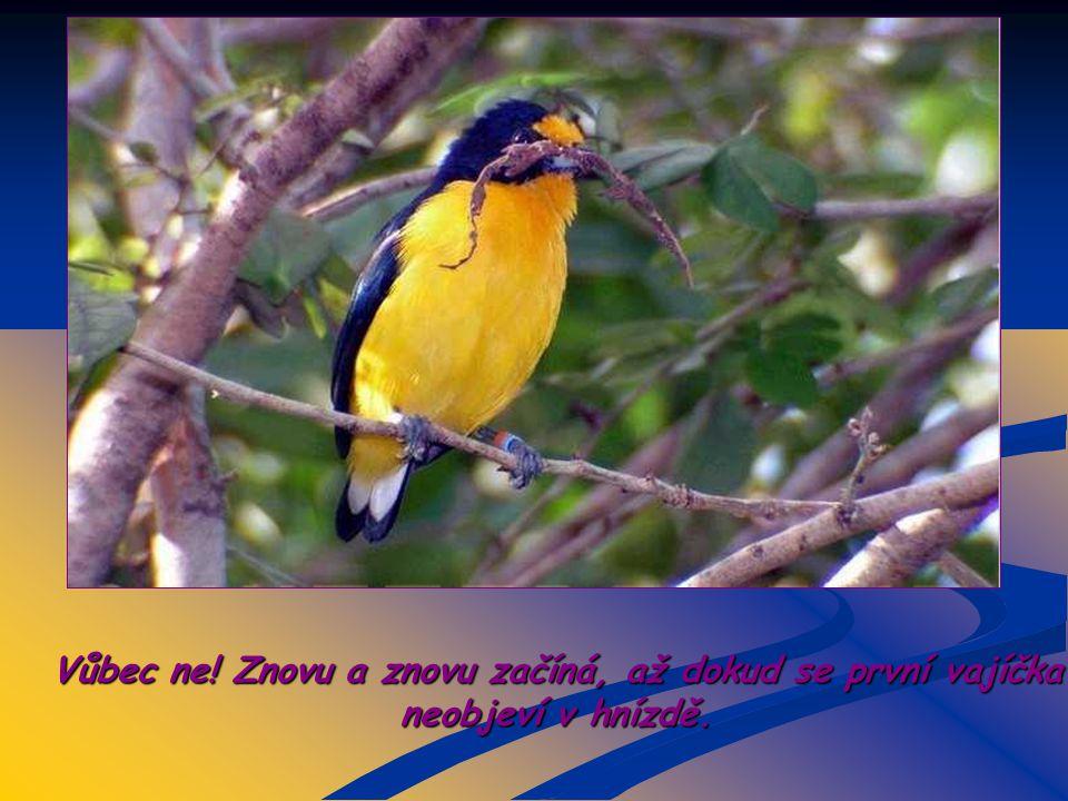 Co udělá pták ? Vzdá se svého úkolu?