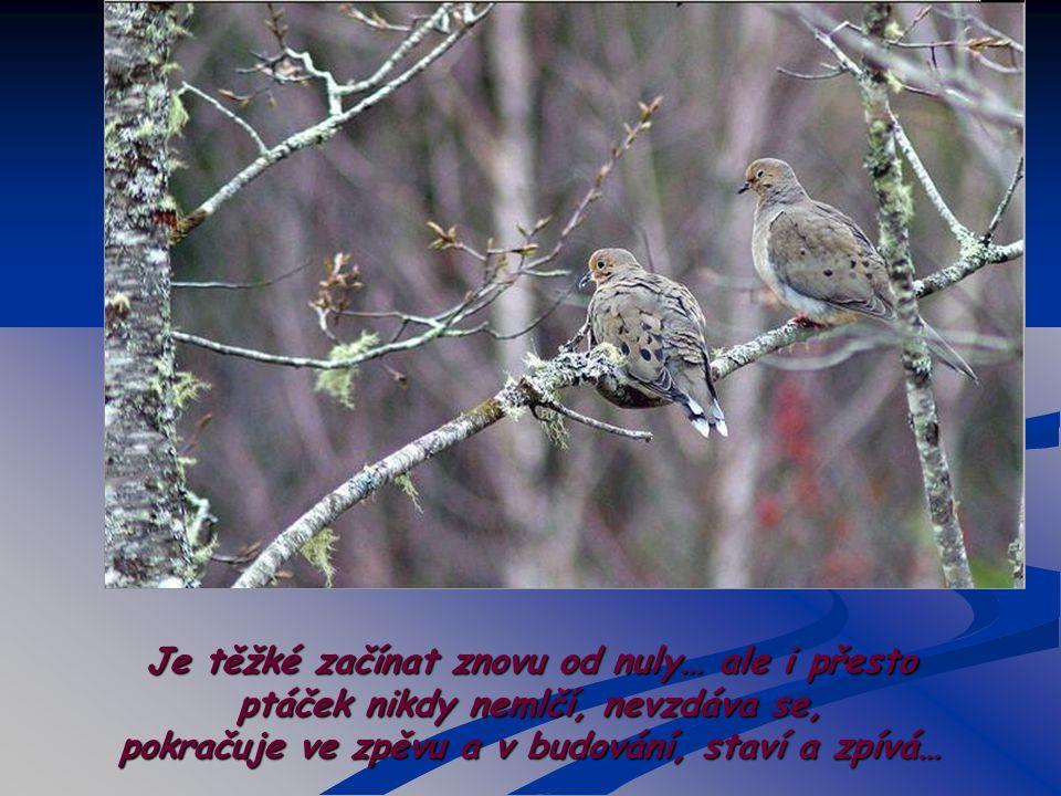Někdy se stane ještě dříve, než se vylíhnou ptáčata,že nějaké zvíře, dítě, bouřka znovu zničí hnízdo, ale tentokrát i s jeho cenným obsahem …