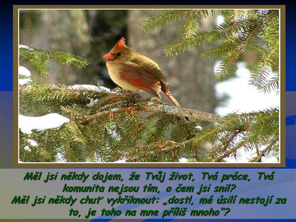 Je těžké začínat znovu od nuly… ale i přesto ptáček nikdy nemlčí, nevzdáva se, pokračuje ve zpěvu a v budování, staví a zpívá…
