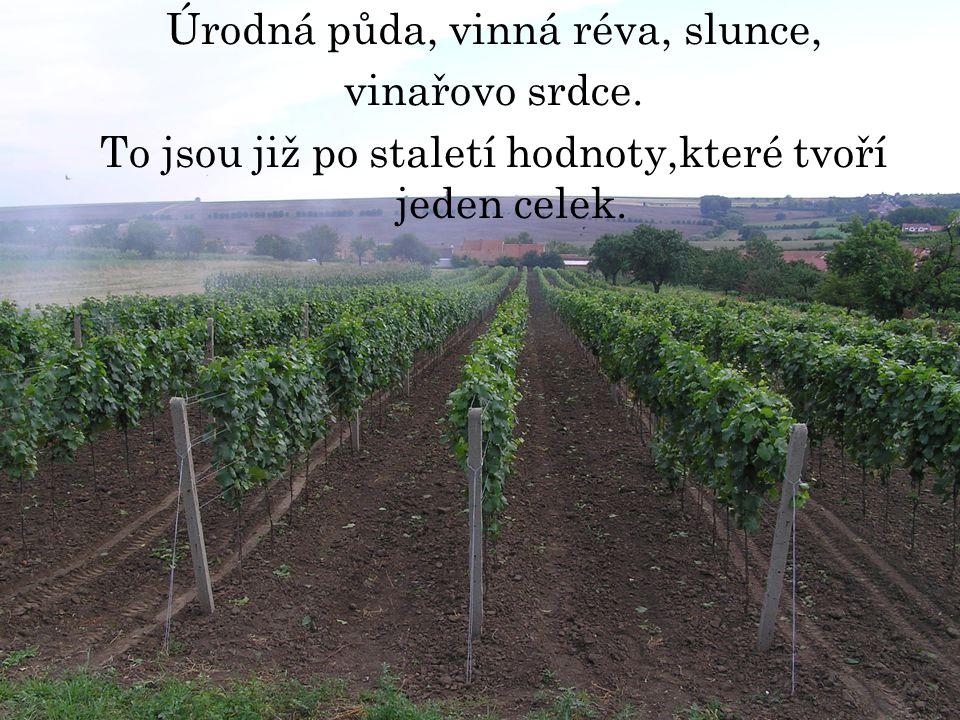 Úrodná půda, vinná réva, slunce, vinařovo srdce.