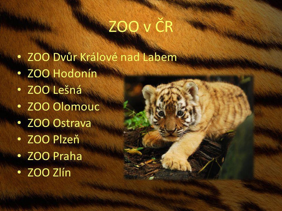 ZOO v ČR ZOO Dvůr Králové nad Labem ZOO Hodonín ZOO Lešná ZOO Olomouc ZOO Ostrava ZOO Plzeň ZOO Praha ZOO Zlín