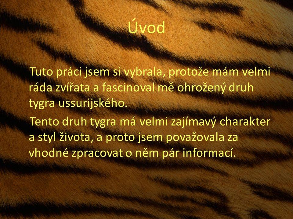 Úvod Tuto práci jsem si vybrala, protože mám velmi ráda zvířata a fascinoval mě ohrožený druh tygra ussurijského. Tento druh tygra má velmi zajímavý c