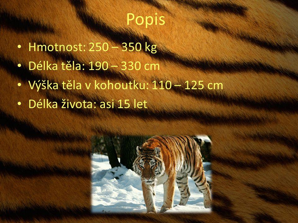 Popis Hmotnost: 250 – 350 kg Délka těla: 190 – 330 cm Výška těla v kohoutku: 110 – 125 cm Délka života: asi 15 let