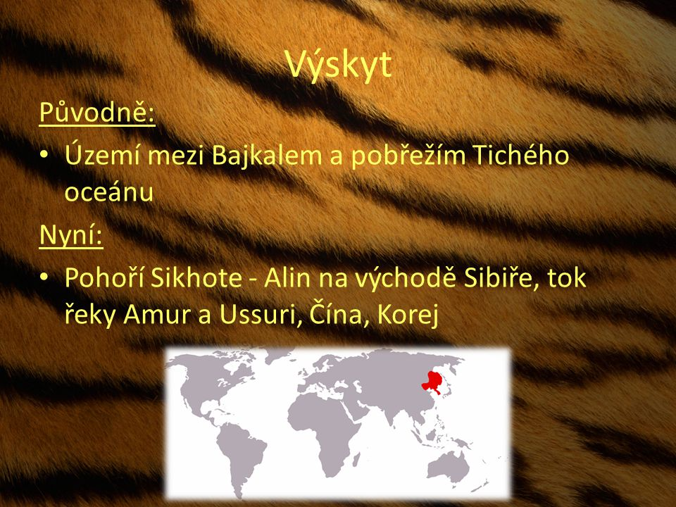 Výskyt Původně: Území mezi Bajkalem a pobřežím Tichého oceánu Nyní: Pohoří Sikhote - Alin na východě Sibiře, tok řeky Amur a Ussuri, Čína, Korej