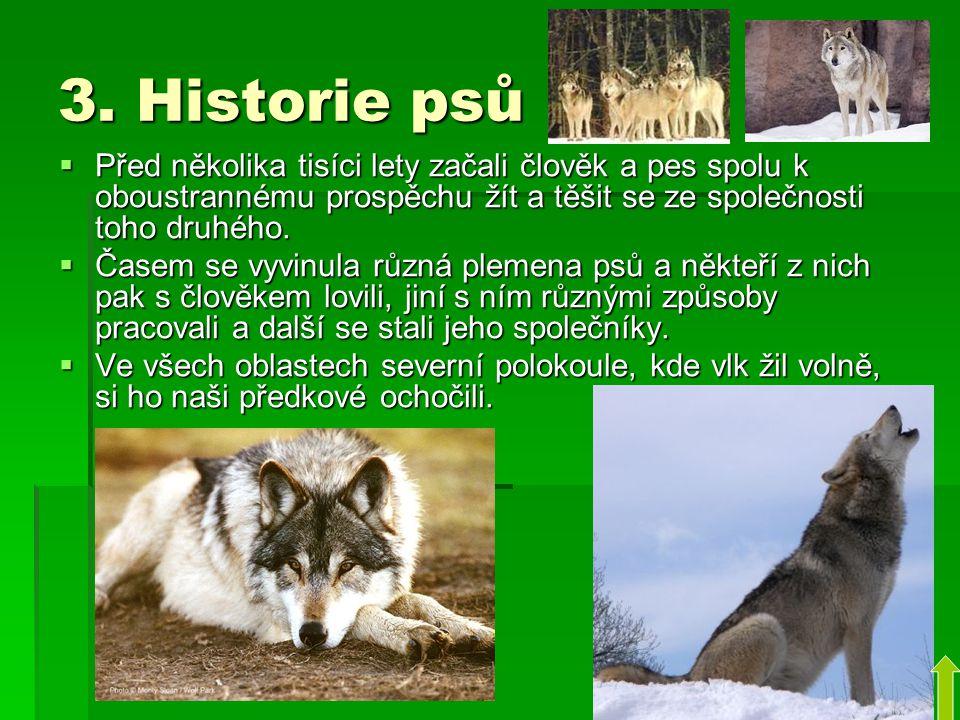 3. Historie psů  Před několika tisíci lety začali člověk a pes spolu k oboustrannému prospěchu žít a těšit se ze společnosti toho druhého.  Časem se