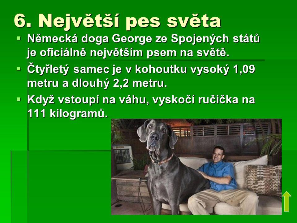 6. Největší pes světa  Německá doga George ze Spojených států je oficiálně největším psem na světě.  Čtyřletý samec je v kohoutku vysoký 1,09 metru