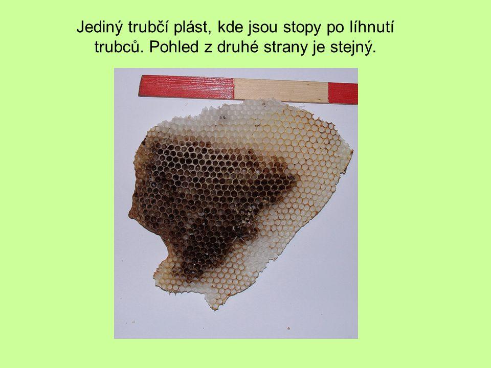 Detail jednoho z předcházejících snímků – včely jsou již opravdu mrtvé.