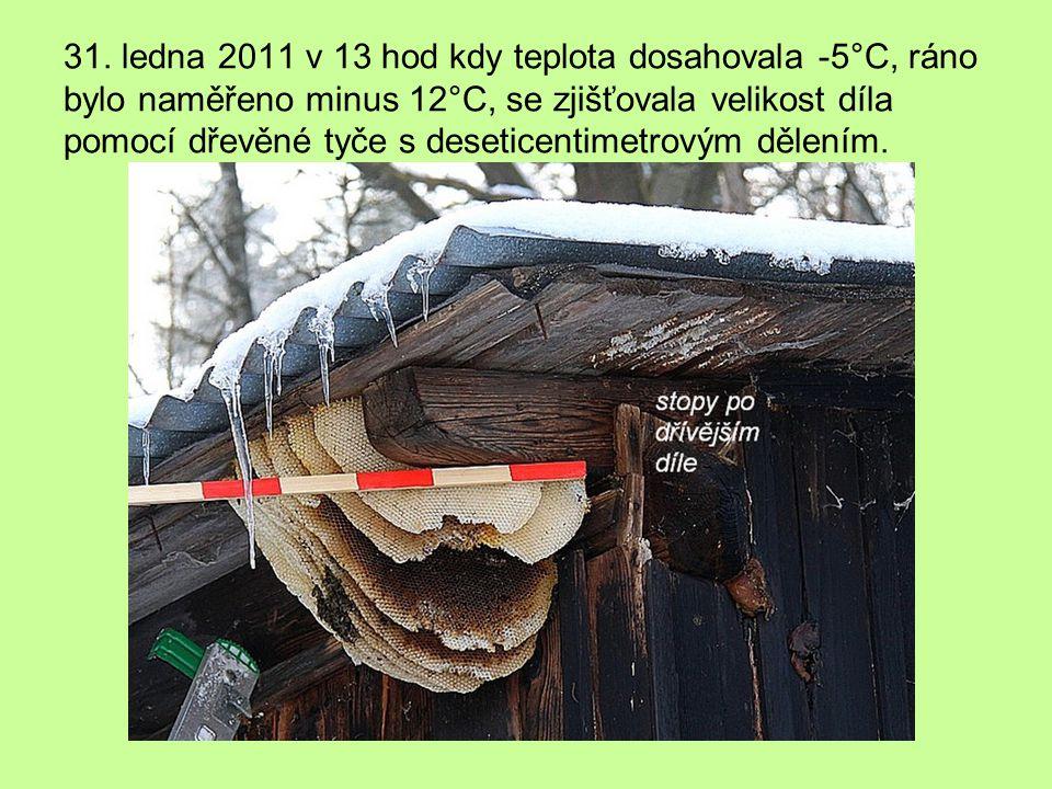 Jeden z vnitřních plástů – levá strana byla ustěny boudy – zbytky zachlazeného plodu.