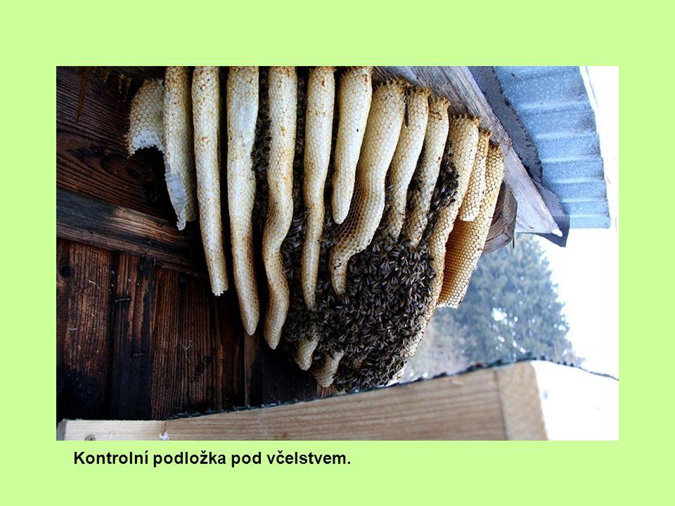 Kontrolní podložka pod včelstvem.