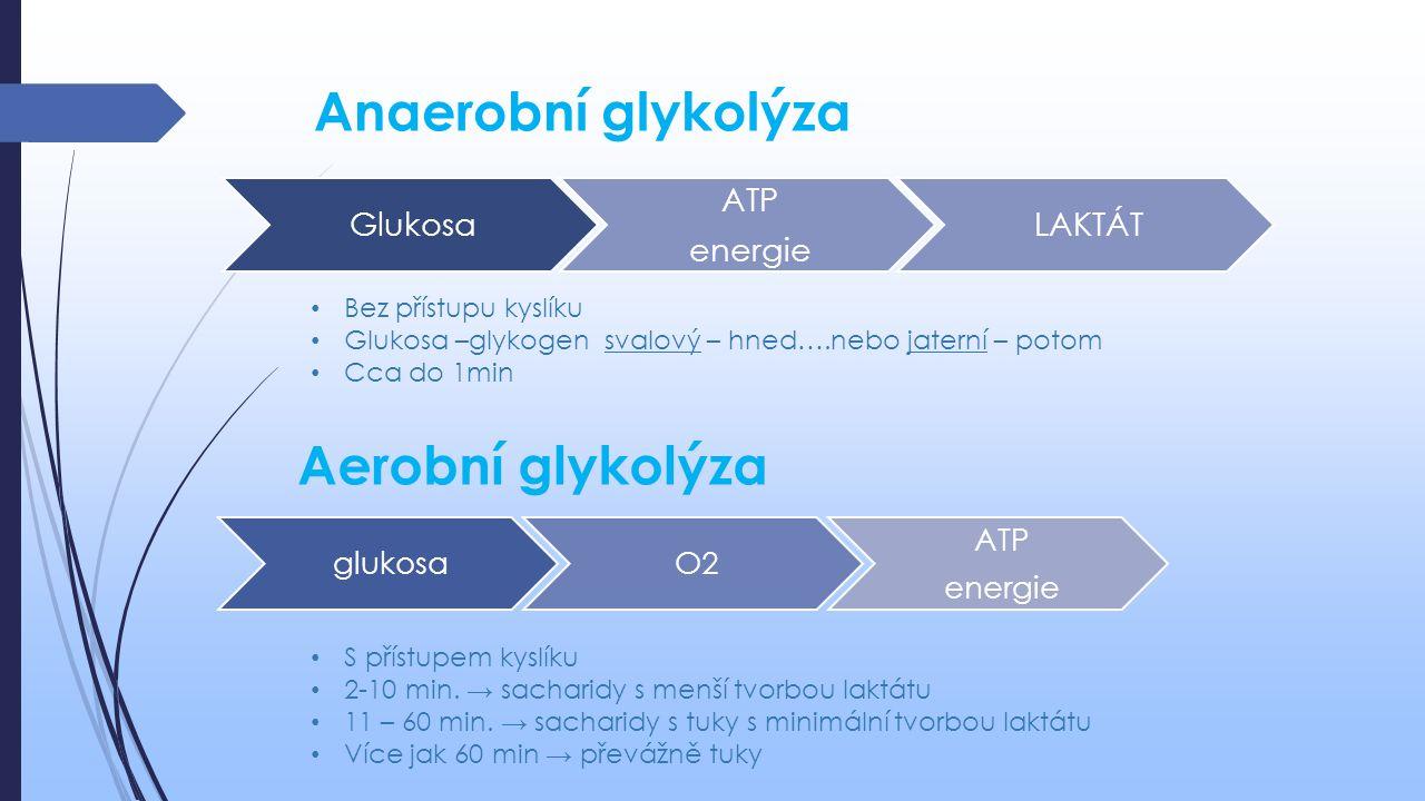 Anaerobní glykolýza Glukosa ATP energie LAKTÁT Aerobní glykolýza glukosaO2 ATP energie Bez přístupu kyslíku Glukosa –glykogen svalový – hned….nebo jat