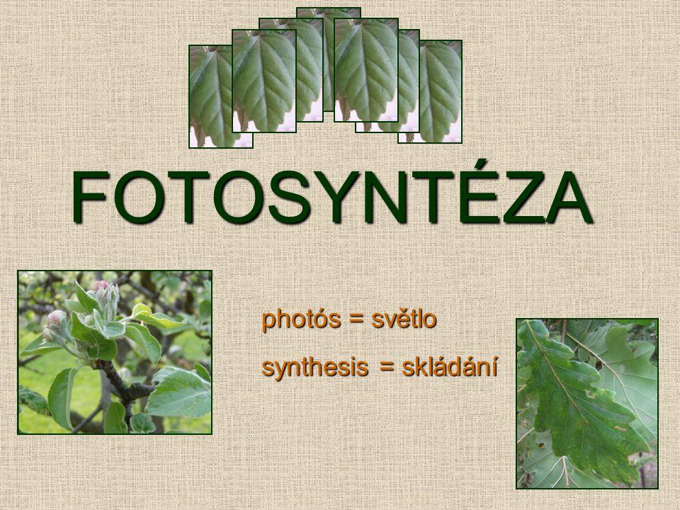 Oranžově ohraničené obrázky jsou převzaty z knihy: ALBERTS, B.