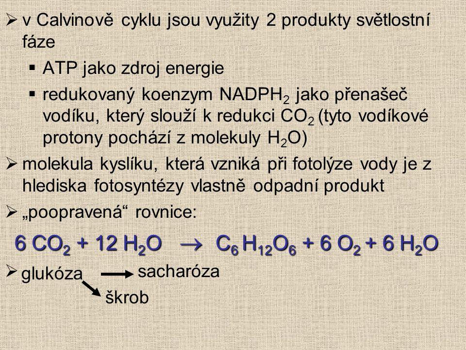  v Calvinově cyklu jsou využity 2 produkty světlostní fáze  ATP jako zdroj energie  redukovaný koenzym NADPH 2 jako přenašeč vodíku, který slouží k