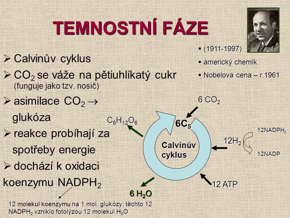 TEMNOSTNÍ FÁZE  Calvinův cyklus  CO 2 se váže na pětiuhlíkatý cukr (funguje jako tzv. nosič)  asimilace CO 2  glukóza  reakce probíhají za spotře