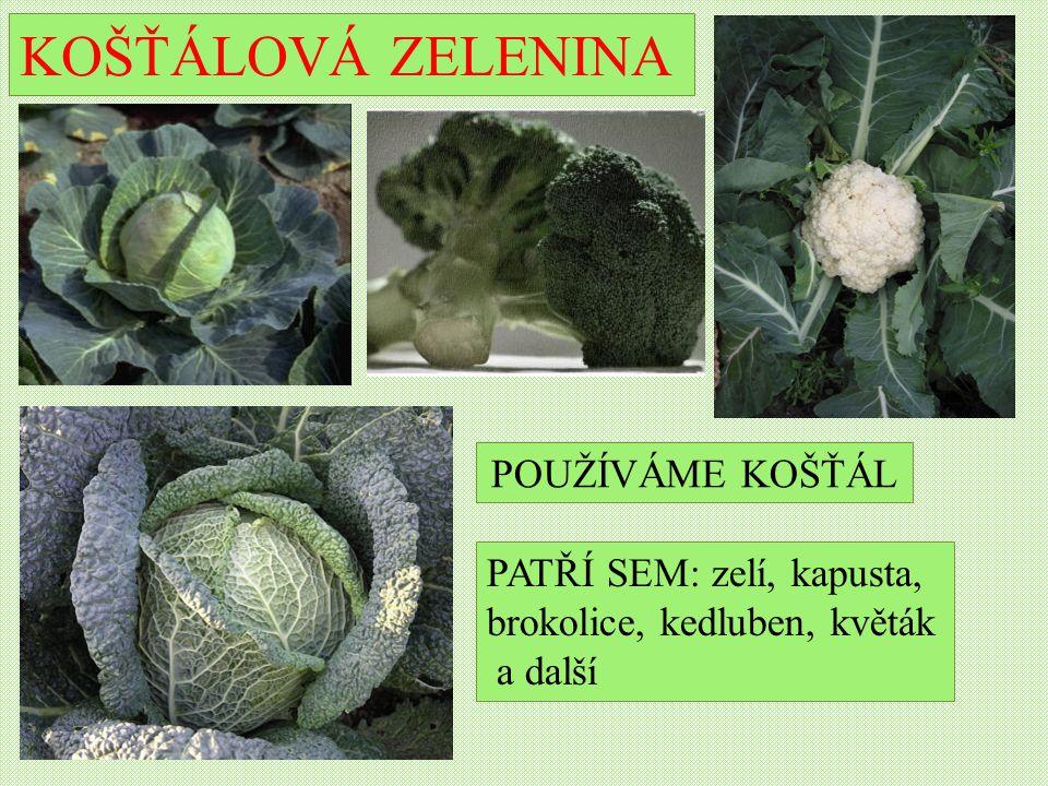 KOŠŤÁLOVÁ ZELENINA PATŘÍ SEM: zelí, kapusta, brokolice, kedluben, květák a další POUŽÍVÁME KOŠŤÁL